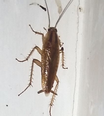 Do you have a cockroach problem.