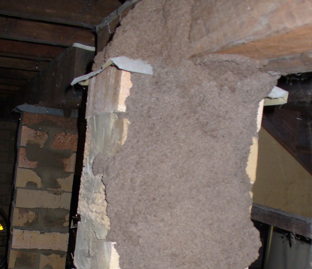 Sometimes there is no obvious sign of termites.