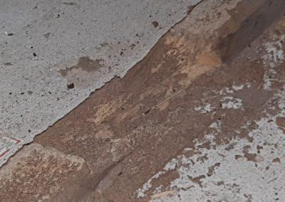 Termite Art 1