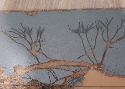 Termite Art 4