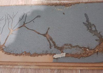 Termite Art 5
